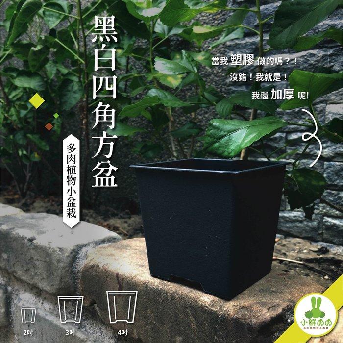 【小鮮肉肉】植栽小方盆 3吋 黑白兩色 塑膠加厚 多肉 栽培盆 花盆 四角盆