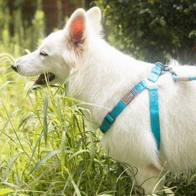Touchdog寵物牽引繩套裝它它邊牧幼犬保護胸背脖圈遛狗狗繩子娜娜子