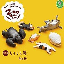 現貨~限量! ZOO 休眠動物園 全6種 (柯基犬、金剛、貓、浣熊、驢子、海獅)
