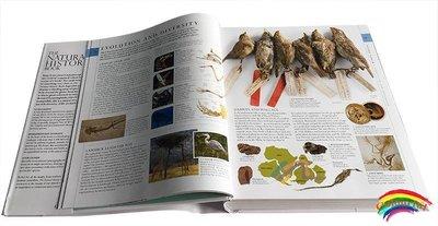 【精裝現貨】DK博物大百科英文正版 The Natural History Book 自然史圖解指南全書兒童大開讀物 植物動物 自然界科普英語原版繪本