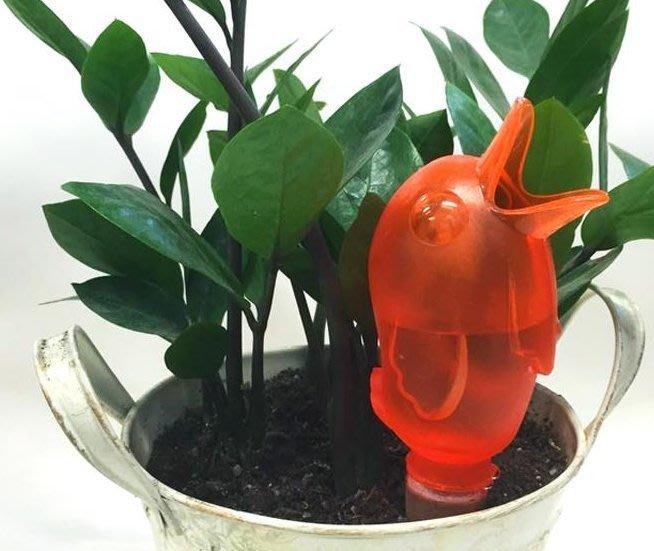 『新品特價$99』創意小鳥自動給水器 自動滲水器 多肉/植物盆栽澆花器