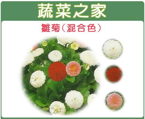 【蔬菜之家】H15.雛菊種子60顆(混合色,高15~20cm.花卉種子)