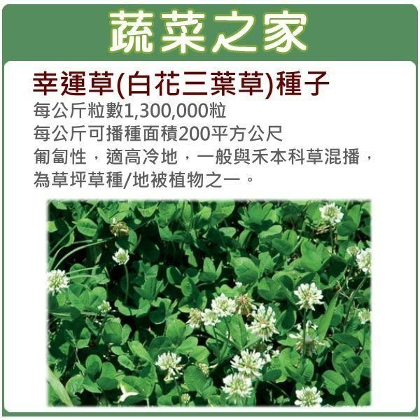 【蔬菜之家】M09.幸運草(白花三葉草)種子7500顆(匍匐性,適高冷地,一般與禾本科草混種,為草坪草種/地被植物之一)