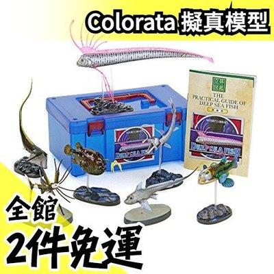 【深海魚】日本空運 Colorata 深海魚立體圖鑑 魚類愛好 地震魚擬真模型組 盒玩 考古生物科學【水貨碼頭】
