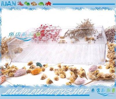 【~魚店亂亂賣~】銓錸-滴流式上部過濾槽~滴流盒(便當盒)長30×17×7cm大(另售小滴流盒)