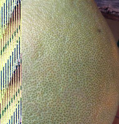 文旦柚 10斤下單處↓↓↓