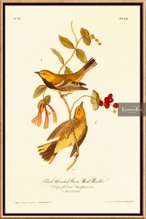 【 LondonEYE 】小法國系列-春日派對X漿果與日光浴 浪漫手繪風格雅鳥兒X細邊框裝飾畫 買三送一PT70