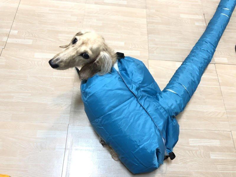 【S、M、L可選】寵物烘乾罩 吹毛神器 吹水衣 貓狗洗澡 快速 吹風機 烘乾衣服 寵物冬天洗澡必備 預防感冒