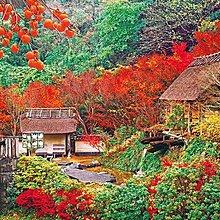 拼圖專賣店 日本進口拼圖 51-265(1000片拼圖 風景 佐賀伊万里的秋天楓紅)