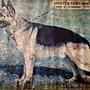 狼犬  德國進口 比賽用高品質 白鐵鍊 防暴衝 控制鍊 p字鍊 狗鍊 寵物 英鬥 拉不拉多 黃金獵犬 比特犬 杜賓 大白熊 柯基 哈士奇 高加索 鬆獅 惡霸犬
