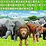 多美動物園ANIA AS-06 河馬(嘴巴可開合)Hippopotamus 48796