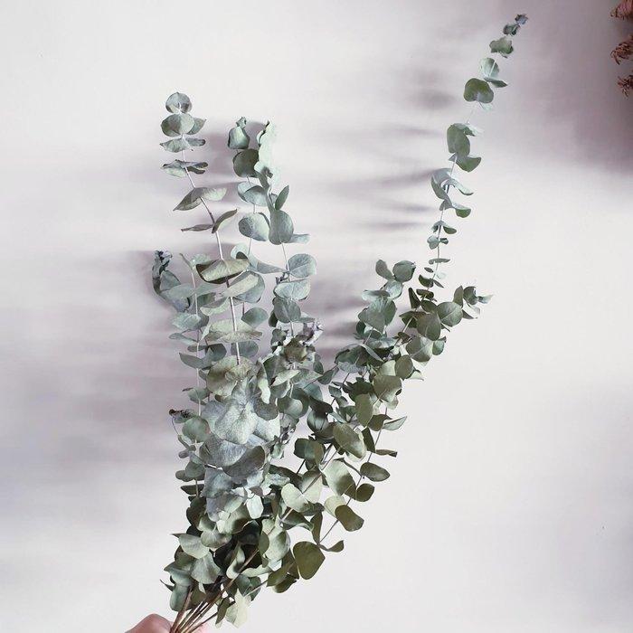 《Roof Garden Workshop》【乾燥花材】乾燥圓葉尤加利葉/鮮花乾燥/外拍/婚紗/佈置/尤加利葉