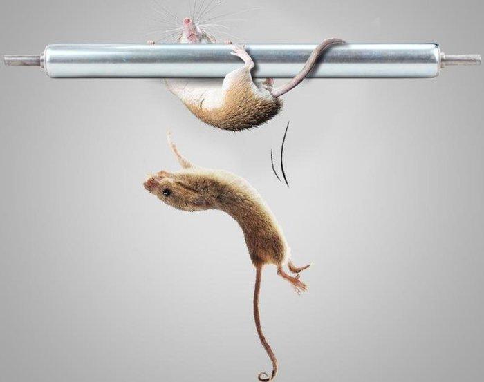 [樂農農] 捕鼠神器 滾輪 金屬滾輪 補鼠棒 1隻120 不含桶
