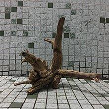 杜鵑根沉木,小,111號