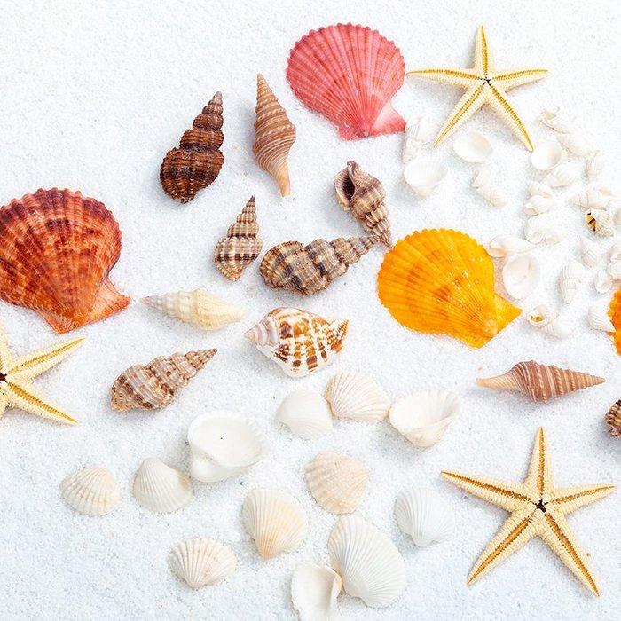 千夢貨鋪-拍照道具網紅美食美甲化妝品拍照裝飾海星貝殼靜物擺拍飾品