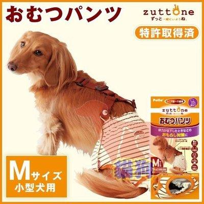 **貓狗大王**日本PETIO《老犬尿失禁用尿布褲-M號》尿褲可重複使用