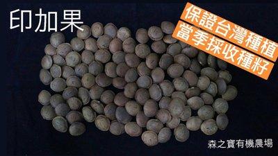 [森之寶]- 印加果 種子 (台灣栽種)、南美油藤、星星果、美藤果、印加花生、印奇果、星油藤 種子 ,每粒3元!