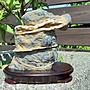 陽紋黑膽石(藏品釋出)