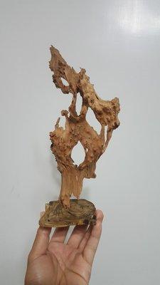 台灣 香杉 小樹瘤 自然 風化 擺飾 裝飾 (2))(非 黃檜 紅檜 檜木 牛樟 紅豆杉 樟樹 肖楠 擺飾 原木 實木)