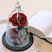 永生玫瑰花,美女與野獸同款玻璃罩,可換玫瑰顏色[原生態工作室]