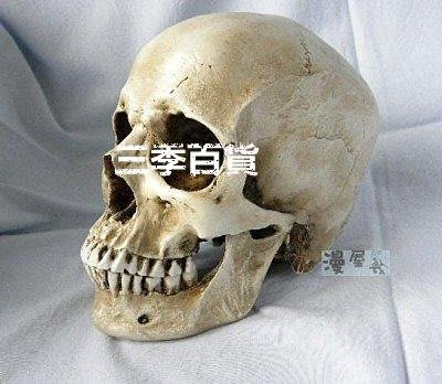 三季高仿真1:1人類頭骨模型 醫學頭骨模型 骷髏樹脂教學模型骷髏頭人體頭骨模型❖872