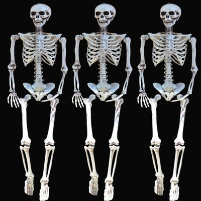 萬聖節 陰屍路 全身 骷顱頭 變形骷顱 造型骷顱頭 骷顱擺設 人體骷顱頭 人體模型 布置【塔克玩具】