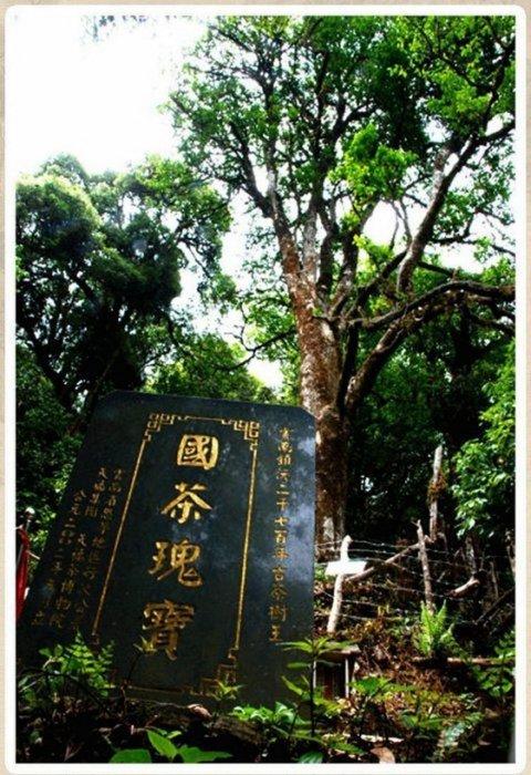 [ 茶太初 ] 千家寨 2700年野生茶王樹  50克 散茶 (總數600克)