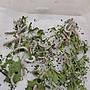 特殊品種驚喜包附桑葉 蠶寶寶 昆蟲觀察 繁殖 療癒 請先問現況 一般都以公分回答 陸續增加品種中