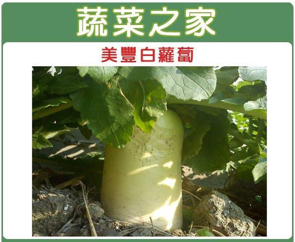 【蔬菜之家】C03.美豐白蘿蔔種子50顆(超雲大根.巨大型,水分含量少.耐燉煮,口感佳.蔬菜種子)