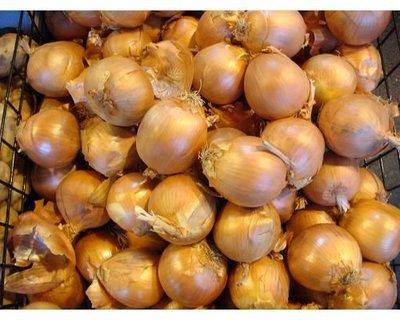 【OPOCA】進口甜種洋蔥(大宗批發)