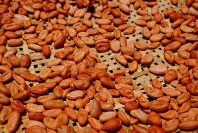 屏東可可豆堅果~100%在地生產的可可果實,原味衛生發酵,風乾後在陽光曬乾和低溫烘焙~營養不流失~惜福可可農場 See Food Cocoa~一包250公克裝