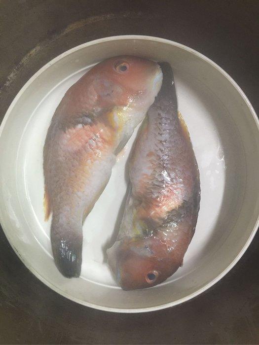 特價-野生寒鯛魚每公斤只要350元☆鴻德水產☆滿額免運