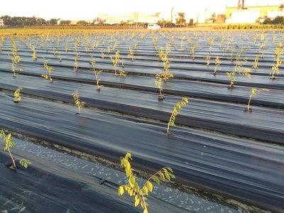 4尺雜草抑制蓆50米長、抑草蓆、另售塑膠固定釘