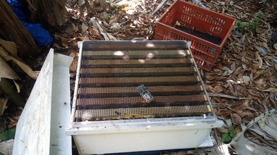 養蜂工具 塑膠蓋網