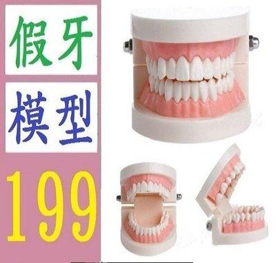 【三峽好吉市】 口腔教學 保健護理牙齒模型 小牙模 口腔用品 幼兒園刷牙教學模型 假牙模型