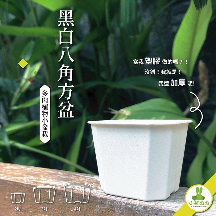 【小鮮肉肉】植栽八角盆 3吋 黑白兩色 塑膠加厚 多肉 栽培盆 花盆 八角盆