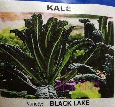 【野菜部屋~蔬菜種子】E56 恐龍羽衣甘藍種子0.65公克(約200粒) ,  風味濃 ,  採收期長 , 每包12元~ 新北市