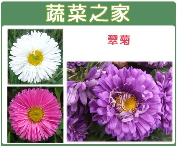 【蔬菜之家】H21.翠菊種子30顆(蜜蕾,混合色,高25cm.花卉種子)