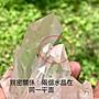 喜馬拉雅白水晶簇 大師水晶 通透 超亮 時光隧道 豐盛水晶 赤鐵礦 接地水晶 編號T1154