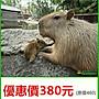 【展覽優惠券】頑皮世界 野生動物園 優惠價380