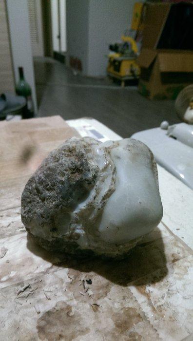 搞狀玉髓(恐龍化石貝化石)1190公克 特價1500
