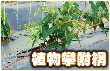 【ToolBox】《180*90cm》家庭園藝用網/植物攀爬網/百香果網/絲瓜網/苦瓜網/栽培網/防蟲網