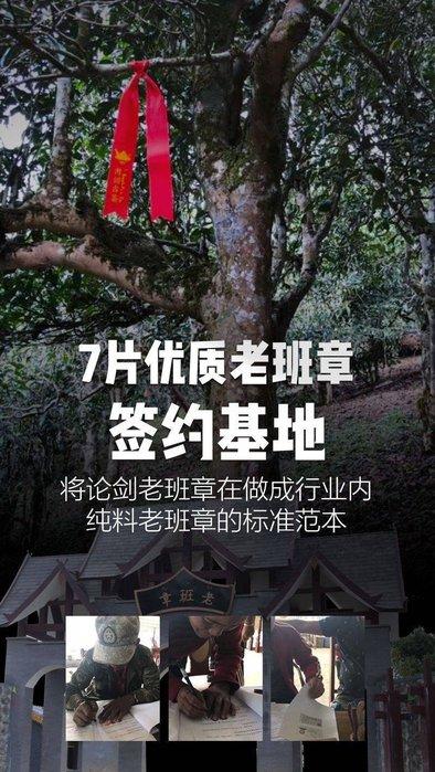 牛助坊~普洱新秀 書劍古茶 2017年 老班章茶王地 古樹頭采春茶 生茶 散茶 10克 體驗分享