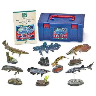 日本正版 立體圖鑑擬真模型BOX 古代魚 7種組 小模型 小公仔 日本代購