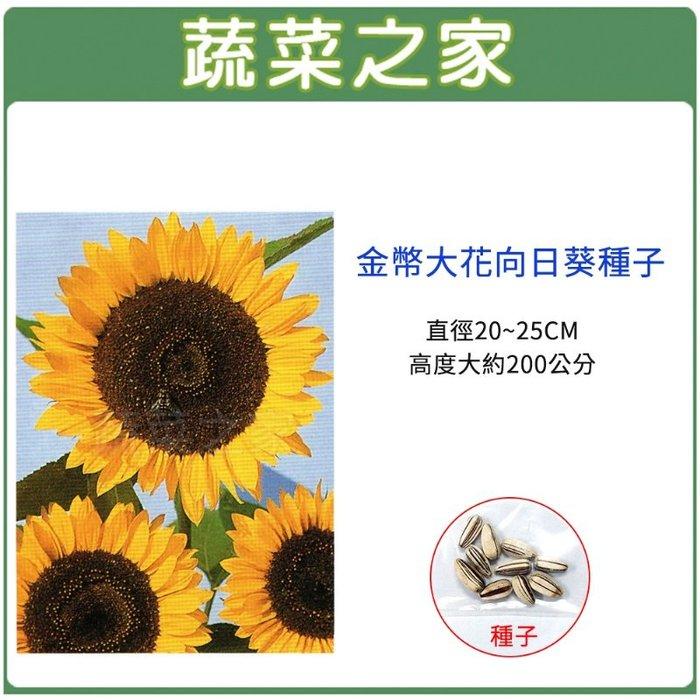 【蔬菜之家】H43.金幣大花向日葵種子10顆(直徑20~25CM,高度大約200公分.花卉種子)