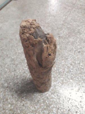 一柱擎天扁柏根,香味濃郁,約:2.4公斤,42公分,鋸斷處直徑9.5公分