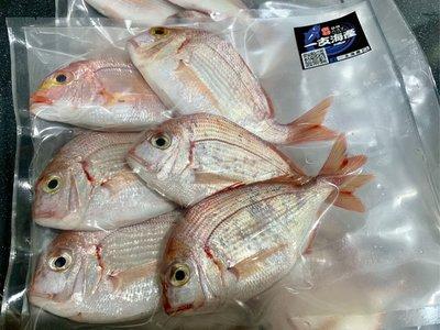 新鮮現撈深海盤仔魚 赤鯮魚