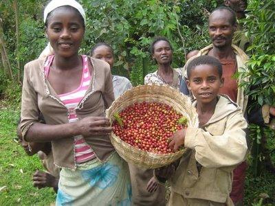 勳咖啡 Merit Café衣索比亞 蓋德奧 耶加雪菲鎮 果波塔村 水洗 G1 熟豆 咖啡豆
