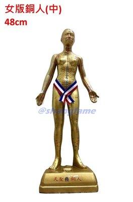 【上發】中醫 穴位 女版銅人 女生 銅人 繁體中文 人體模型 48cm 18銅人 經絡 針灸 體穴位 天聖銅人 玻璃纖維