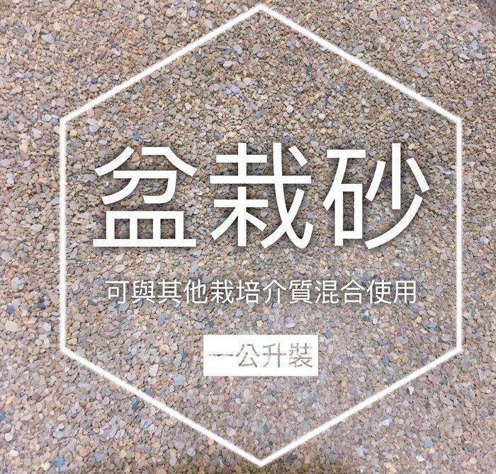 【小鮮肉肉】盆栽砂 細河砂 多肉配土介質 1L裝(超取最多4包)